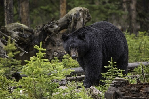 bear market strategies